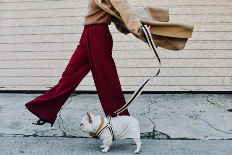 french bulldog outfit