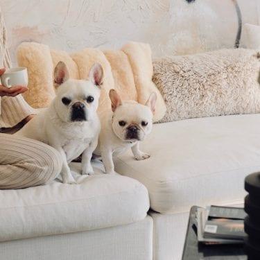 French bulldog home