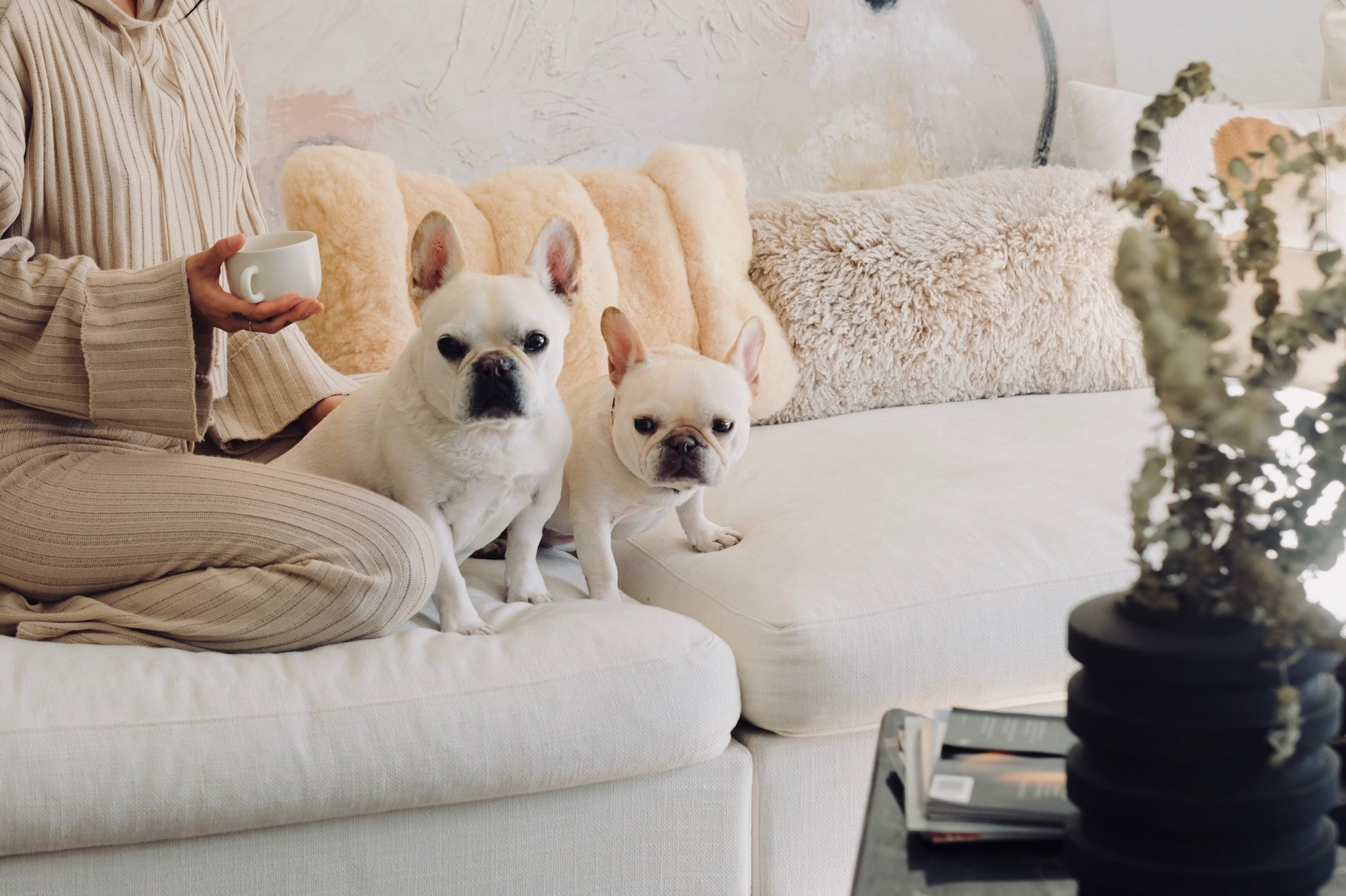 French bulldog home