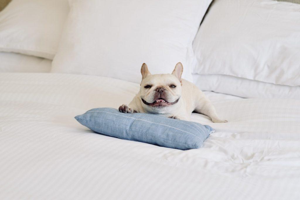 dog friendly hotel in carmel